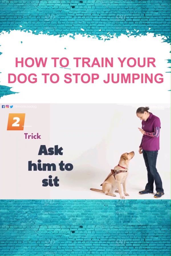 Expecting A New Puppy Here S Everything You Need To Know To Prepare New Puppy Bringing Home Puppy Puppy List