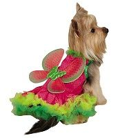 Watermelon Fairy Dog Halloween Costume  Price €23.99 [£20.87]