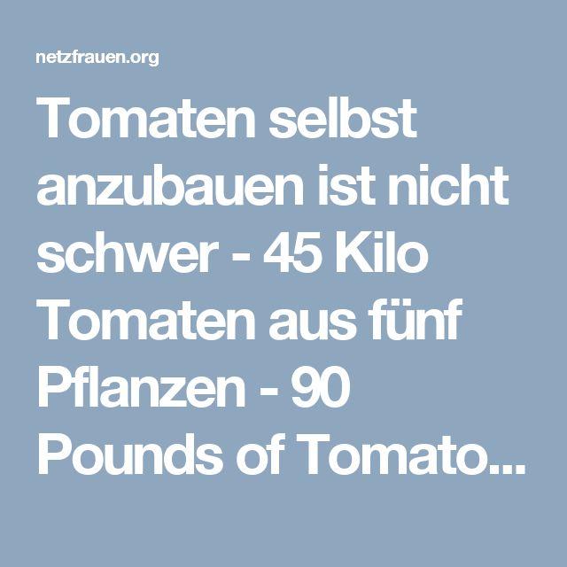 Tomaten selbst anzubauen ist nicht schwer - 45 Kilo Tomaten aus fünf Pflanzen - 90 Pounds of Tomatoes from 5 Plants - netzfrauen– netzfrauen