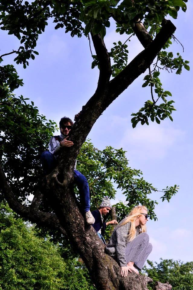 Domowe na drzewie :)