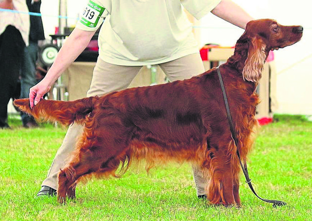 Champion line by Simon Parsons #dogs #dogshows