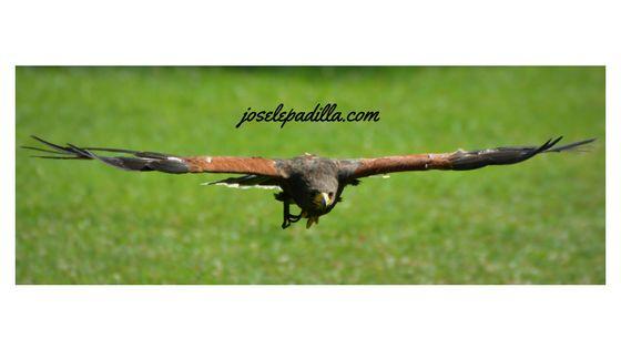 Renovarse O Morir: La Renovación Del Águila
