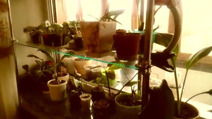 Полка для комнатных растений