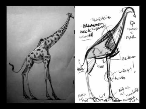 Drawing-Giraffe
