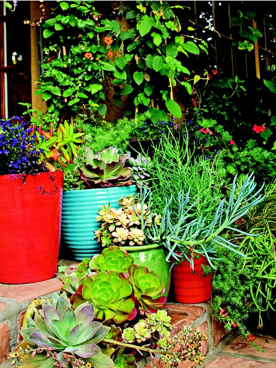 Colorful container gardens great to add color to small spaces