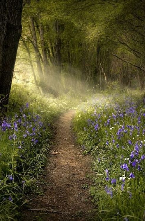 swansong-willows: (via ~Bluebell Forest Path~ | Earthly delights | Pinterest)