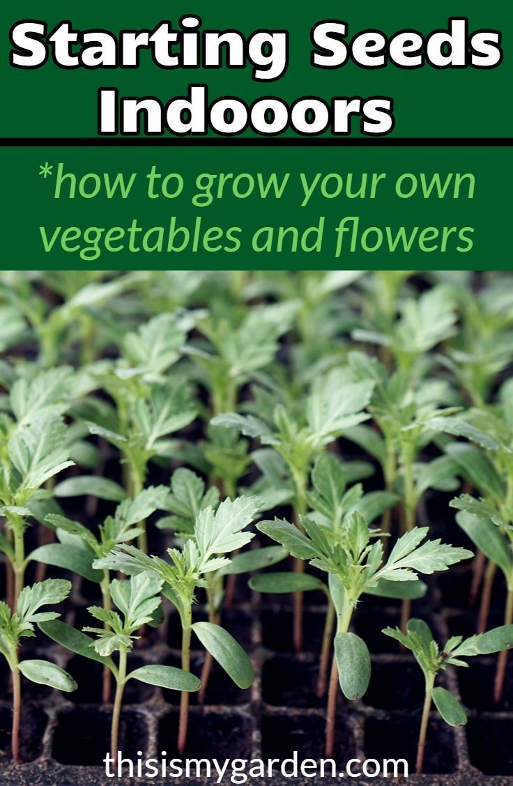 How To Start Seeds Indoors For Vegetables Flowers Seedlings Indoors Starting Flower Seedlings Planting Herbs