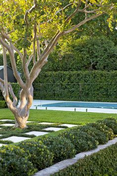 Pool fence and crepe myrtle. Green, green and more green - my kind of garden.