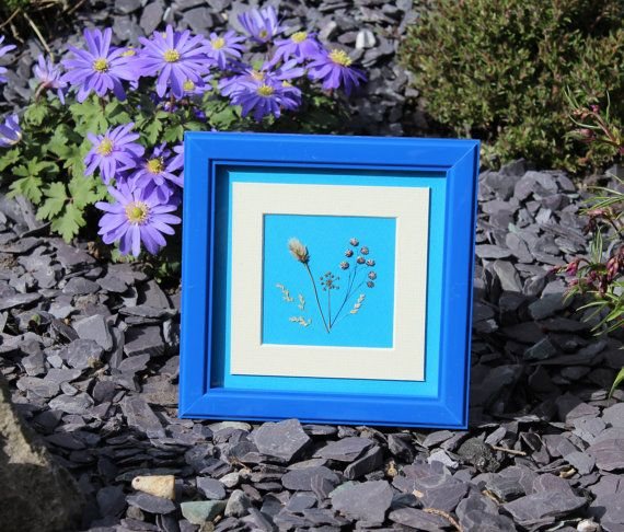 Hand Pressed Irish Wild Flower Picture  Royal by TheOwlTreeIreland