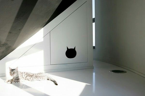Under-the-stairs cat house