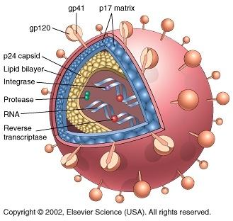 117 best images about Viruses on Pinterest | Digital illustration ...