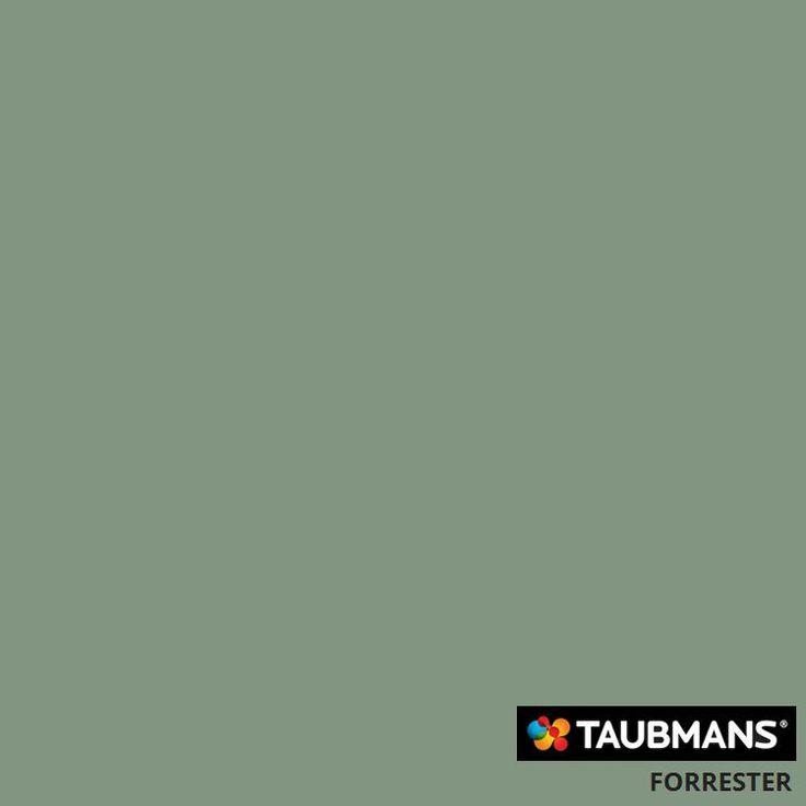 #Taubmanscolour #forrester