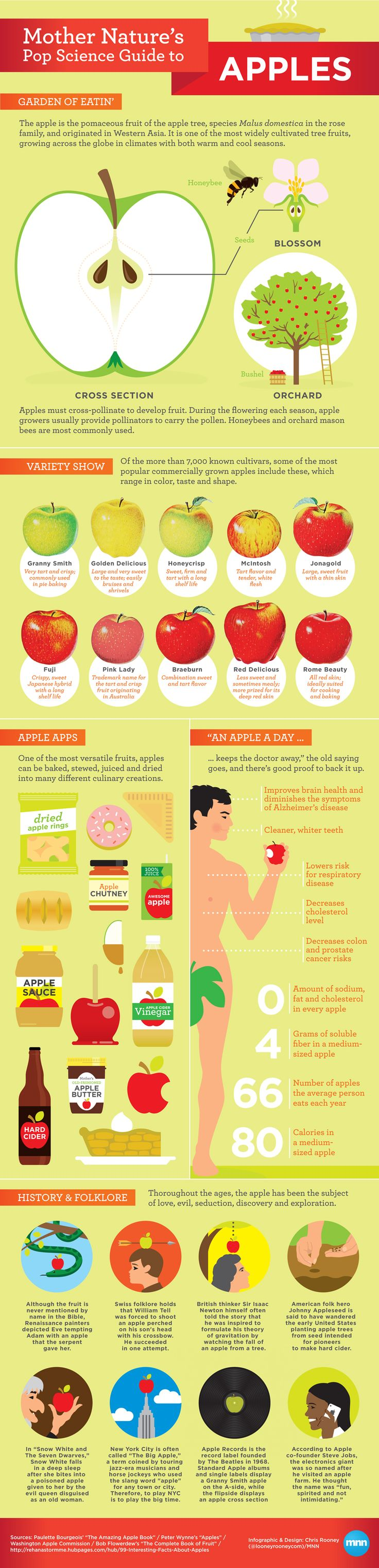 All sizes | Mother Nature's Pop Science Guide to Apples infographic!