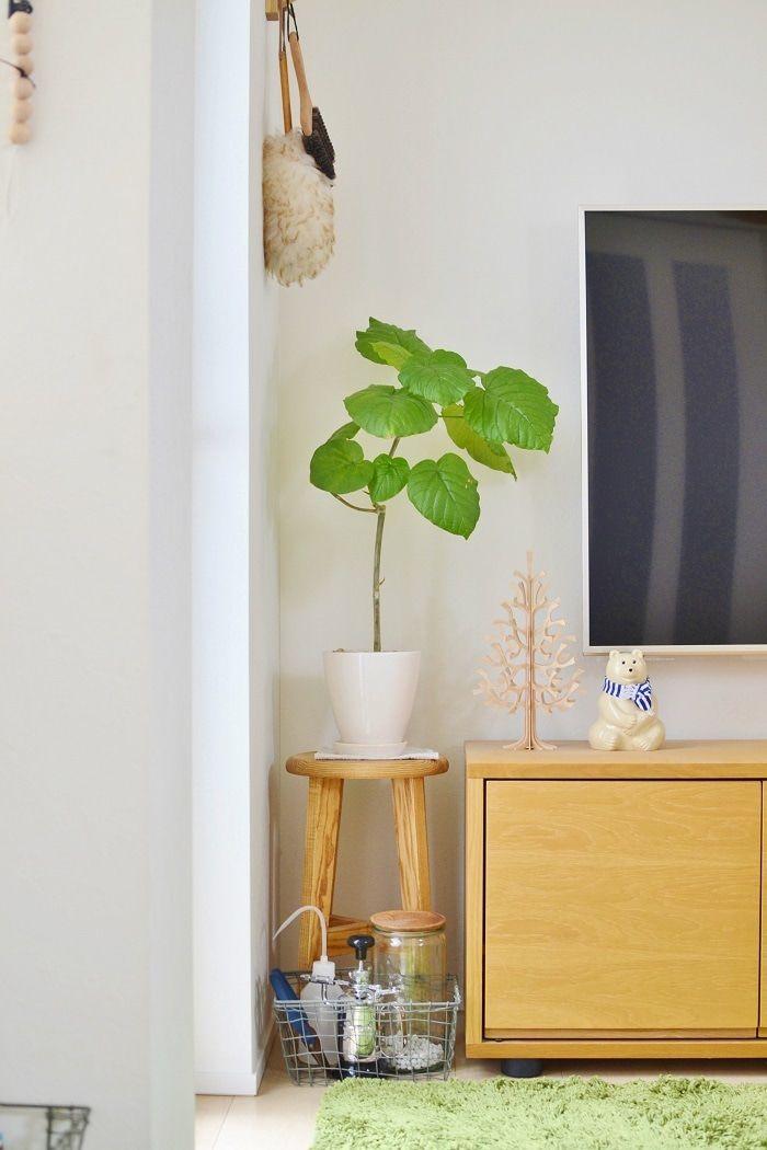 風水に学ぶ 観葉植物 のインテリア術 トイレや玄関 リビングに置い