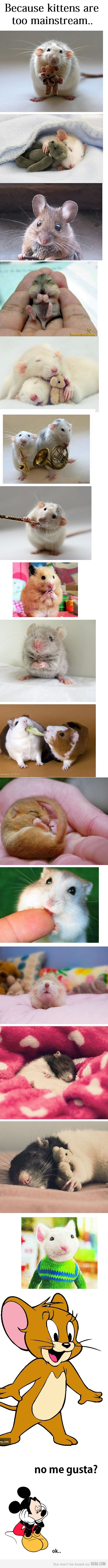 Rats! People do not understand what great pets they are..