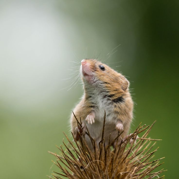 Animal Portraits By British Wildlife Photographer George: 464 Best Meeses Images On Pinterest