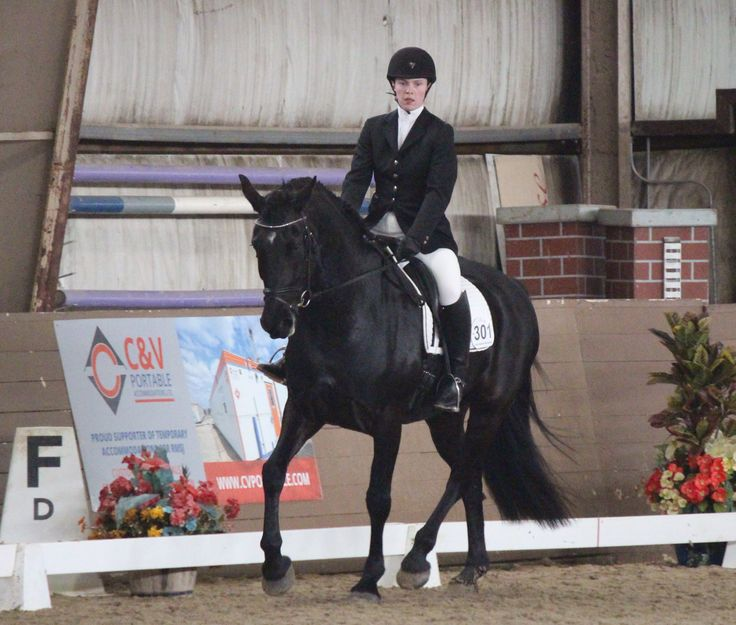 ARCHANGEL WHF - Carrots and Cocktails Series III Dressage Training levelReserve champion. Such a good baby and such a hard worker. So proud of my exquisite Friesian Sporthorse.