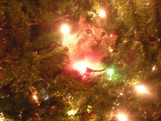 Meanwhile, In Some Parallel Universe. A Hilarious Compilation Of The Constant Battle Between Cats & Christmas Trees • Page 4 of 5 • BoredBug