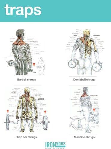 Anatomía del ejercicio. Músculos y su desarrollo. www.rubenentrenador.com