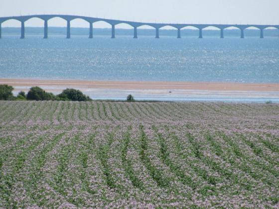 PEI - Bridge, Beach and Potatoes