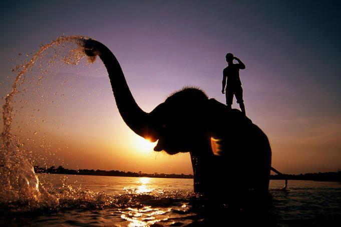 Rapti River, Nepal: Elephants, Rapti River, Sunset, National Parks, Chitwan National, Travel, Nepal