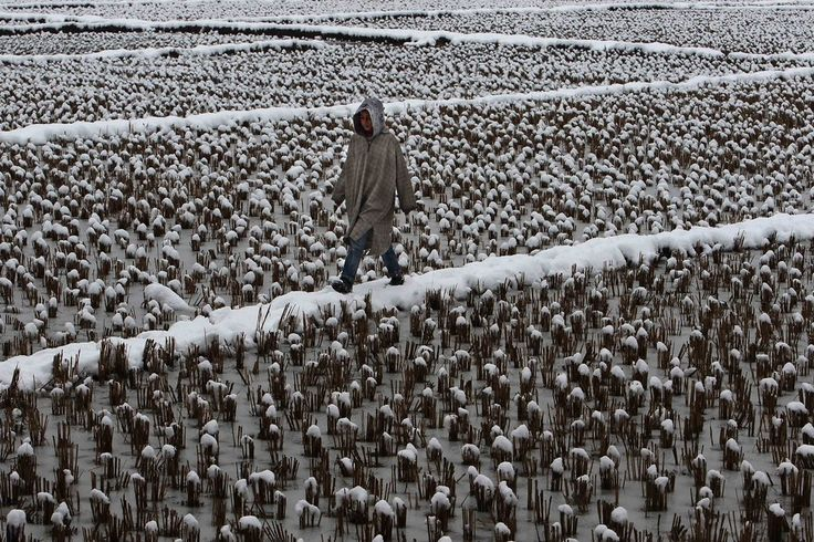 Week of Feb 28 - Mar 6, 2015 A boy walks through a snow covered field on the outskirts of Srinagar, summer capital of Indian-controlled Kashmir. — Javed Dar/Xinhua/Zuma Press