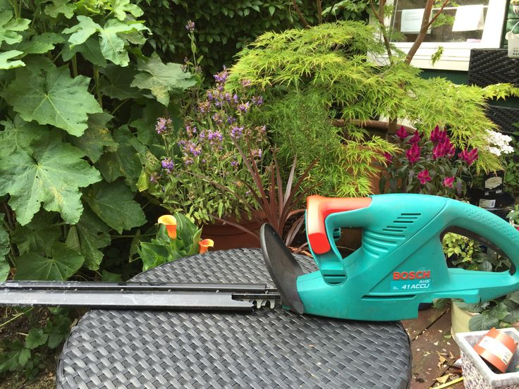 My Garden Gadget Of The Day