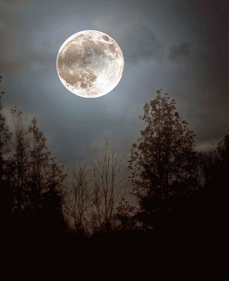 ночь в лесу в полнолуние картинки рассказала, что