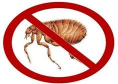 How to Kill Fleas? If you are having a flea problem then you need to kill fleas. Fleas are small parasites that feed on humans and warm blooded animals. Fleas come into ...