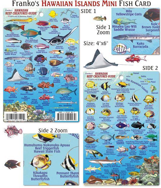 Laminated Hawaiian Islands Mini Reef Creatures Fish Card