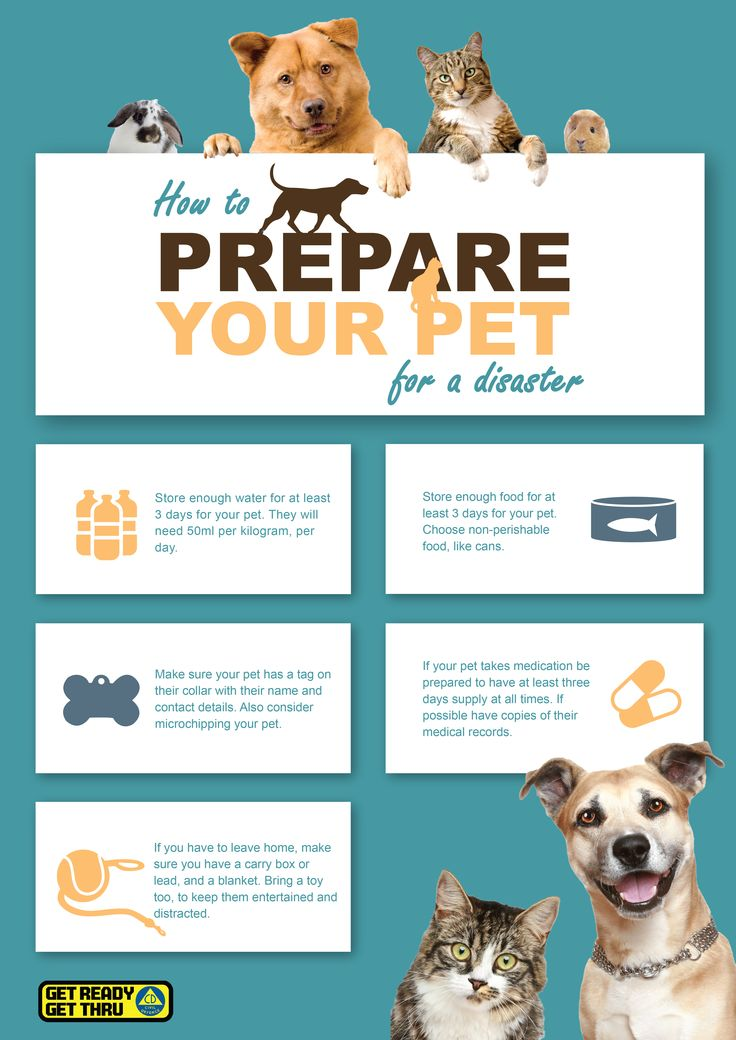 How to prepare you pets for a disaster