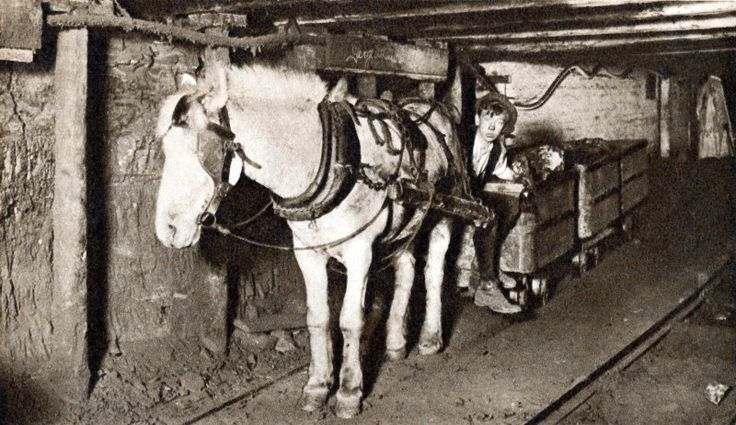https://thebaker77.files.wordpress.com/2014/01/pit-pony-tub-and-driver-in-a-british-coal-mine-c1930.jpg