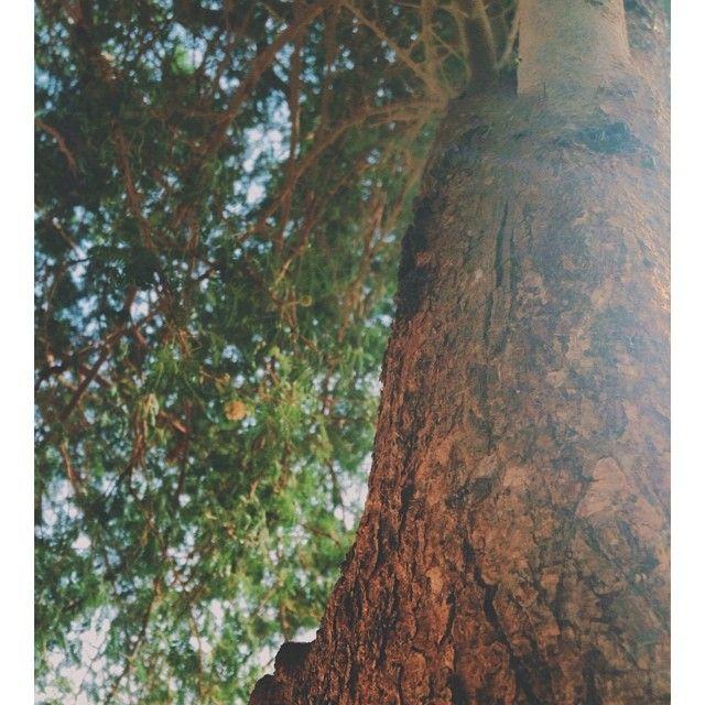 نـور On Instagram الإستغفار قصه طويله بدايتها الدنيا ونهايتها الجنه بمشيئة الله فلا تصمتوا ابد ا استغفر الله العظيم وأتوب إليه Plants Tree Pictures