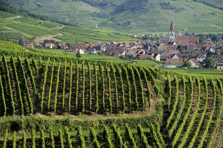 Les #vignes d' #Ammerschwihr, avec vue sur le village #viticole
