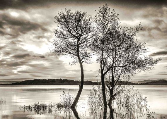 Black and White Photography - Very large black and white tree print - Minimalist Art - Trees in water print - Fine Art Giclee - Nature Print