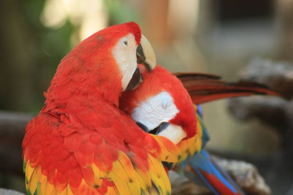 Tropical Photographs Macaws by PictureYourMemories on Etsy
