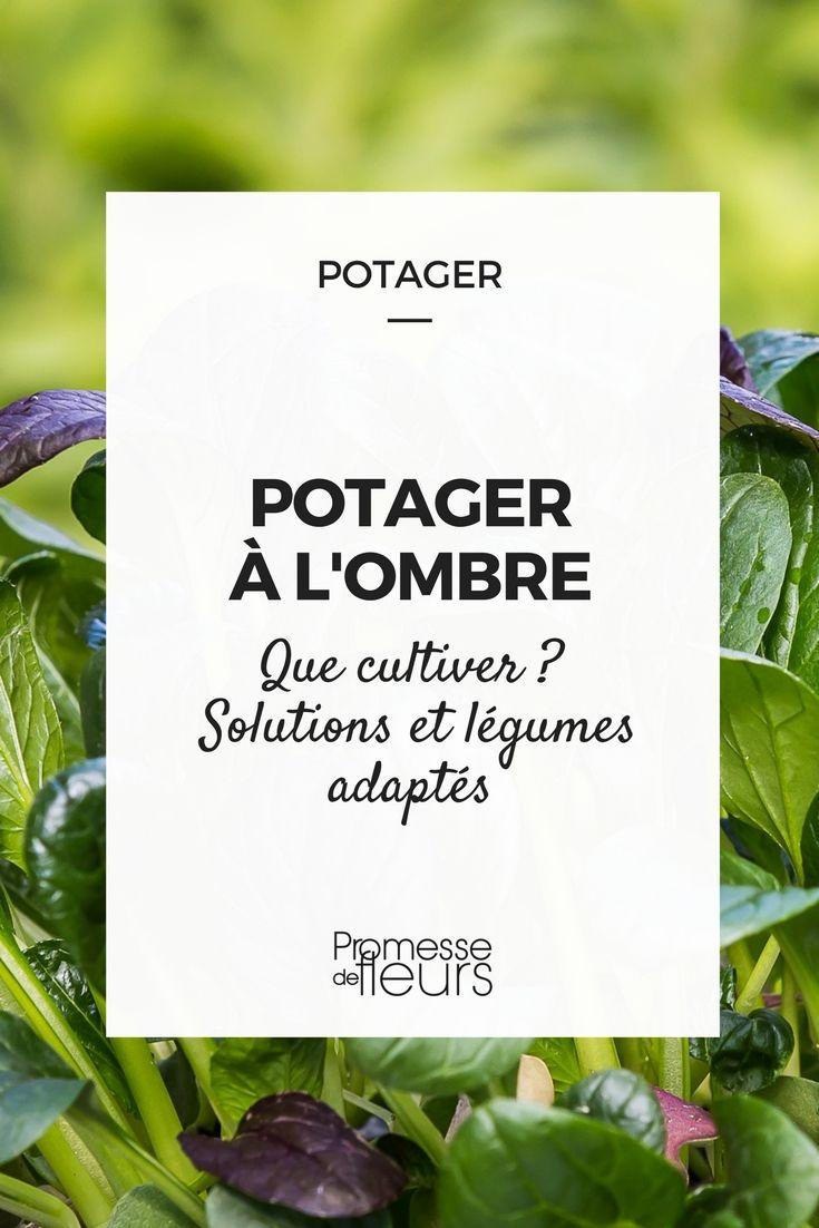 #potager #ombre #conseil