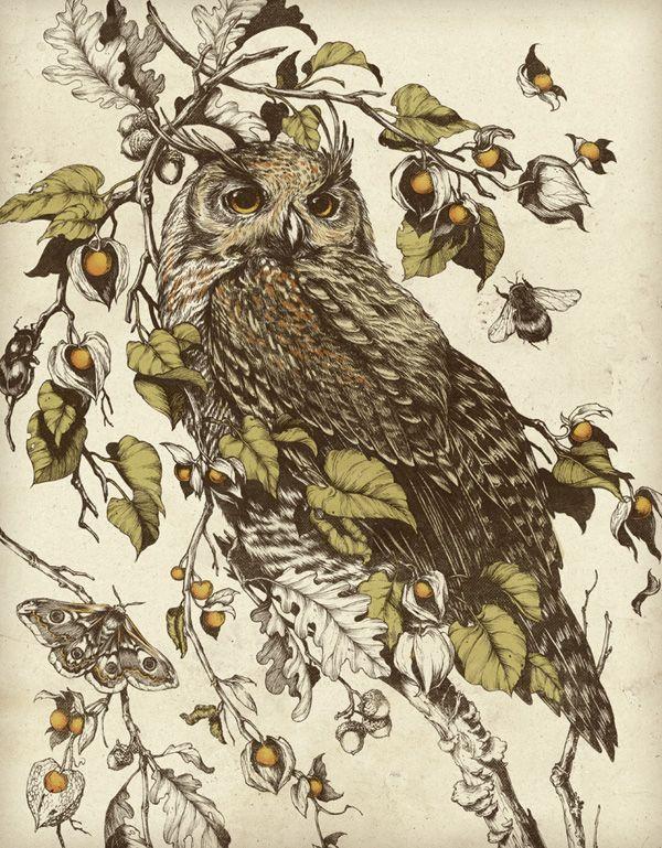 Открытка с совами и птичками
