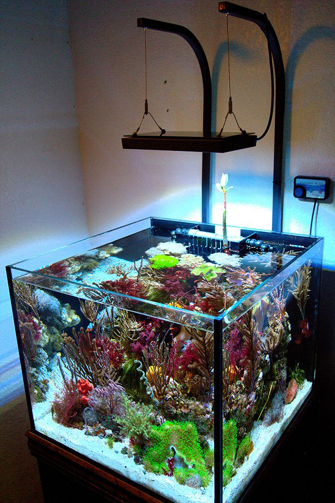 While everyone else is trying to get as much SPS as possible, this one of a kind tank is completely filled with gorgonian and soft corals.  Read more: http://reefbuilders.com/2014/02/18/zia-reefer/#ixzz2thwkE4dx