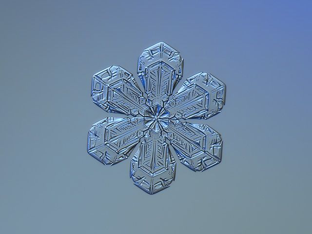 best 25 real snowflakes ideas on pinterest snowflake
