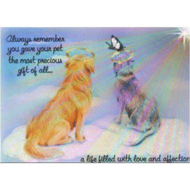 Sympathy Dog Quotes: 1806 Best Sympathy,Loss For Our Pets Images On Pinterest