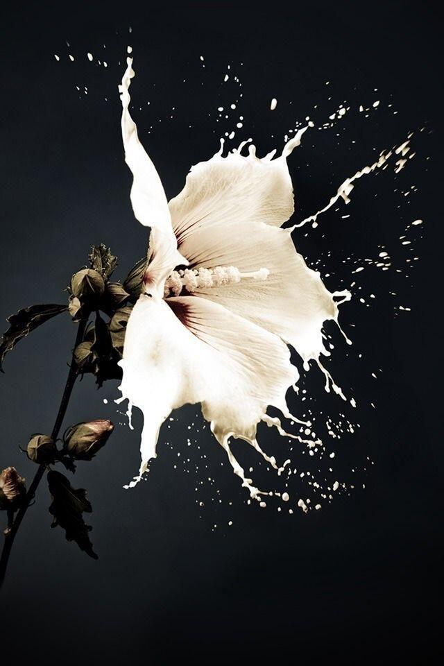 flower splash #amazing #beautiful pictures