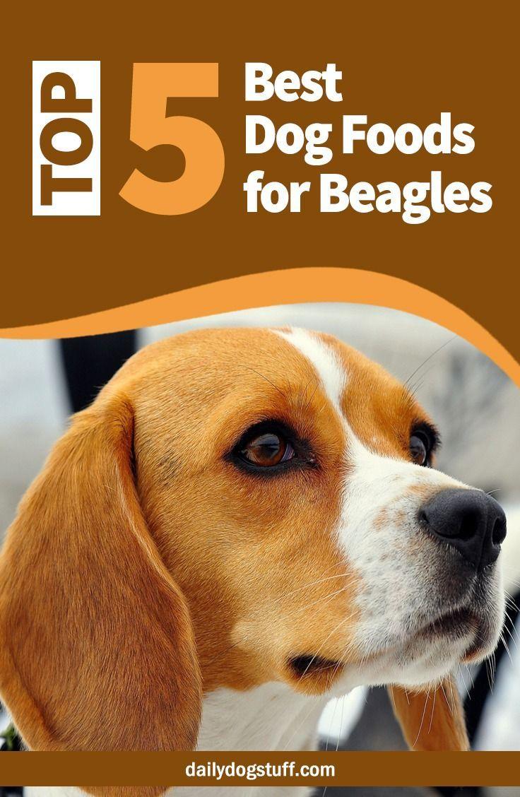 Top 5 Best Dog Foods For Beagles Dog Food Recipes Best Dog Food
