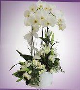 Seramik Vazoda Orkide Ve Lilyumlar