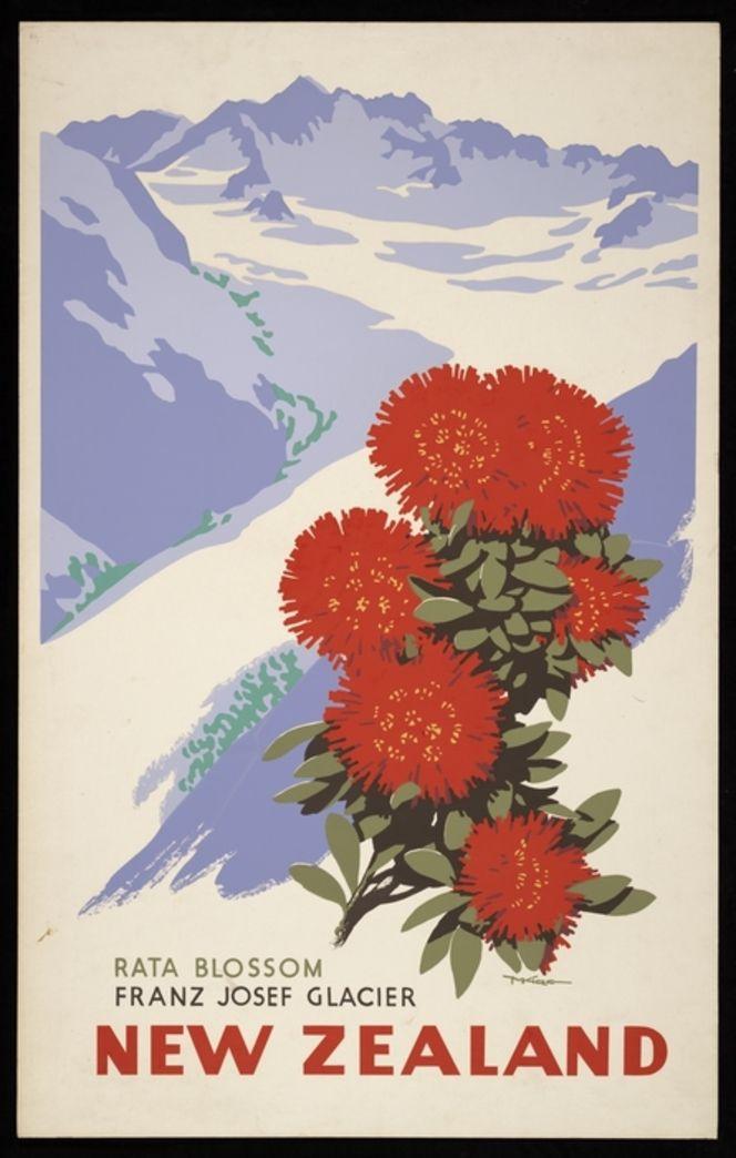 King, Marcus, 1891-1983 :Rata blossom, Franz Josef Glacier, New Zealand. [1930s].