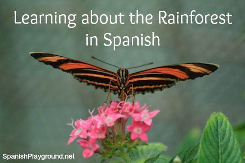 Rainforest Activities in Spanish