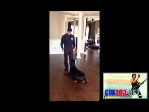 Video Lucu Anjing Doberman - Cm303