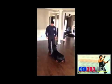 Video Lucu Anjing Doberman - Cm303