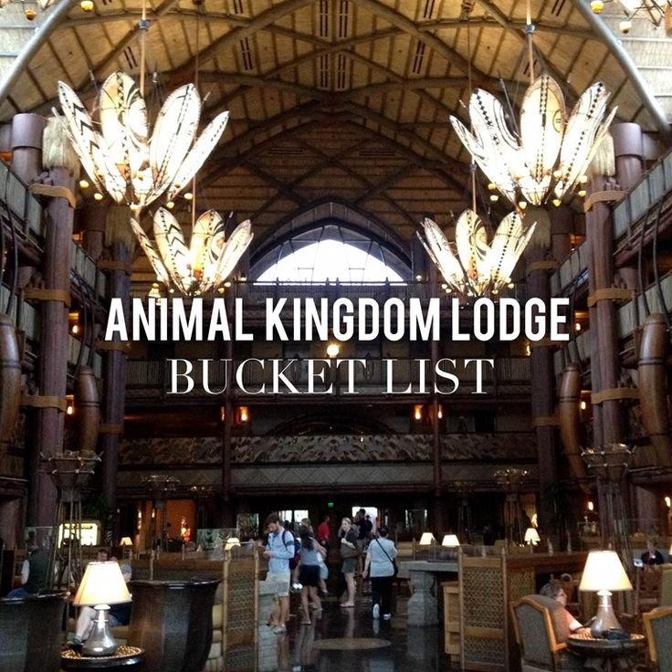Animal Kingdom jeri@travelwiththemagic.com
