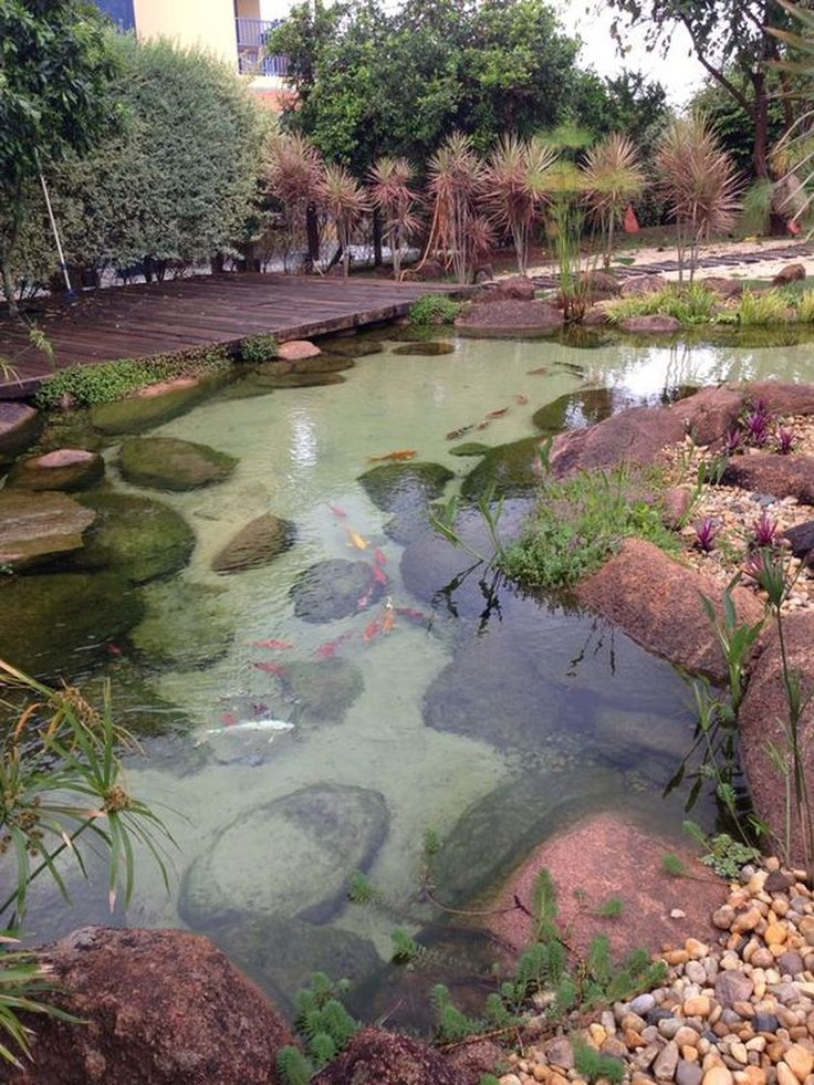 2952 best natural swimming pools ponds and water stuff for Garden fish ponds designs